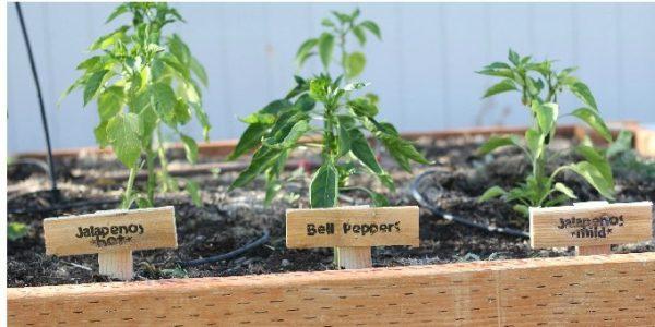 DIY-Garden-Markers