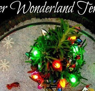 Winter Wonderland Terrarium