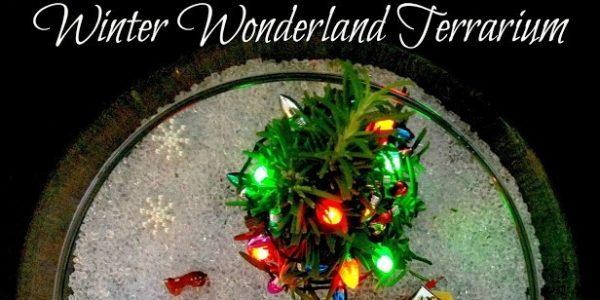 christmas terrarium lights TITLE Bigger