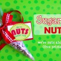 Make sugared nuts for Christmas gifts. Recipe and free printable included - Design Dazzle