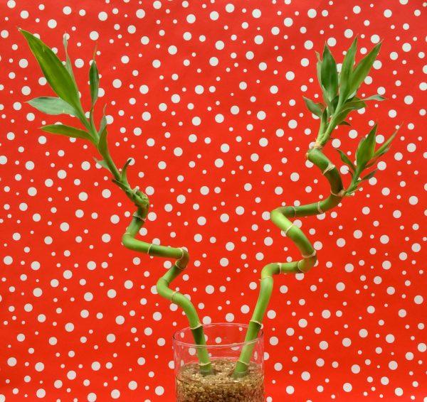 Rudolf Centerpiece Antlers